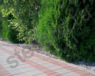 Вариант укладки тротуарной плитки брусчатка и квадрат
