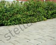 Тротуарная плитка старый город белый Stellard