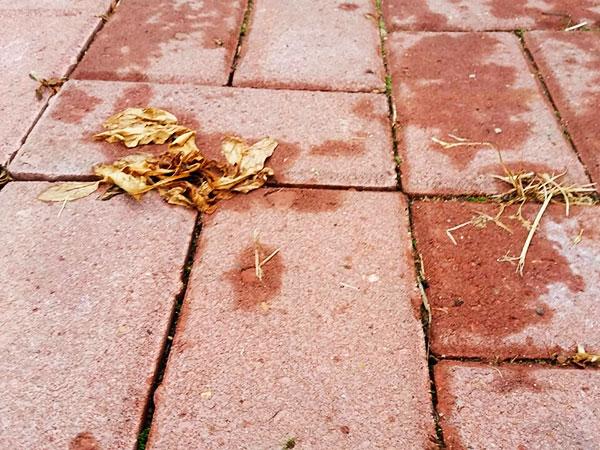 Действие Раундапа для уничтожения сорняков на поверхности плитки