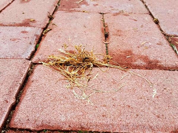 После применения гербицидов трава высыхает уже через неделю