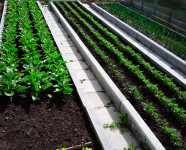 Грядки из тротуарной плитки Квадрат 30х30 и садовых бордюров